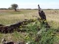 DSC09354 Groot Zwarteveld.