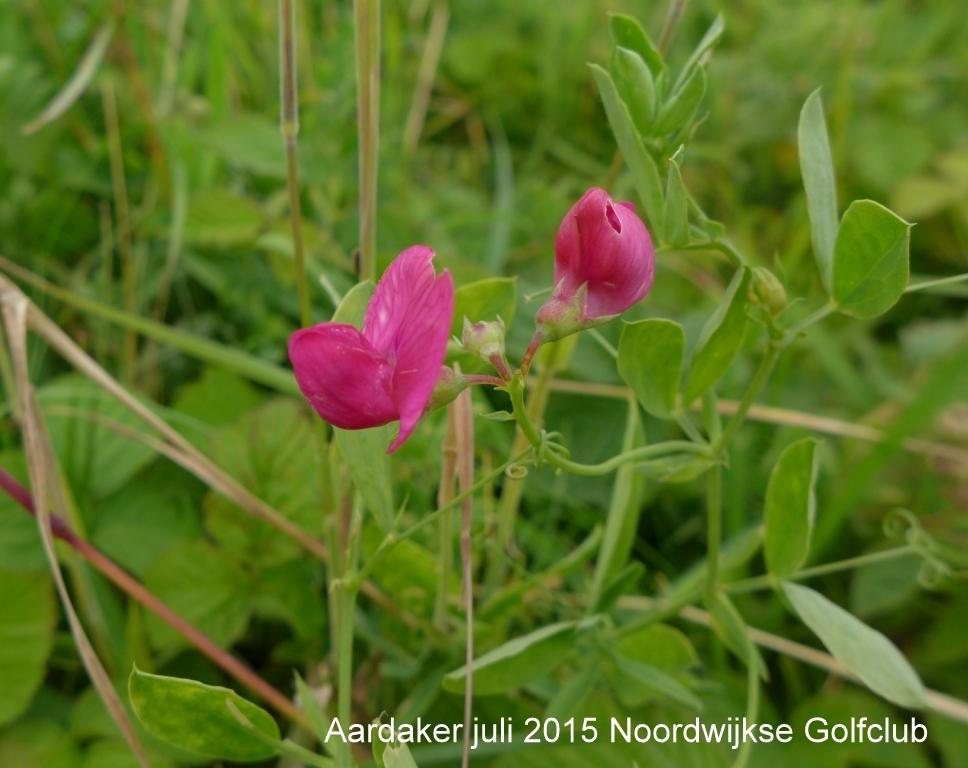 Aardaker juli 2015 Noordwijkse Golfclub