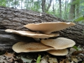 paddenstoelen (10)