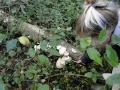 paddenstoelen (3)