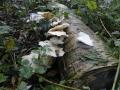 paddenstoelen (4)