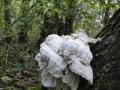 paddenstoelen (5)