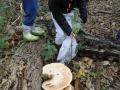 paddenstoelen (7)