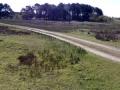 012 DSC09812 Groot Zwarteveld