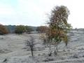DSC03404 Berk, Vinkenveld