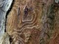 09-DSC06230-Kaleboom-Engelse-bos.