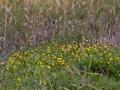 IMG_8702 geel bloemen