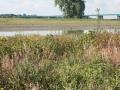 landschap bij Tull en 't Waal