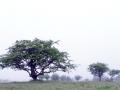 014 DSC03502 Meidoorn in mist, Krommedel.
