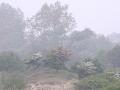015 DSC03555 Meidoorn in mist.