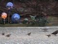 IMG_5853 Vogels