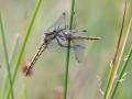 24-DSC02695-Grote-keizerlibel.