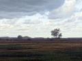 DSC05858 Regen, Groot Zwarteveld.