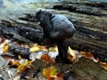 03-DSC04718-Zwarte-knotszwam-Engelse-bos.
