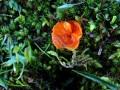 17-DSC04825-Oranje-moszwam-De-Vellen.