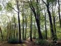 11-DSC04419-Engelse-bos.