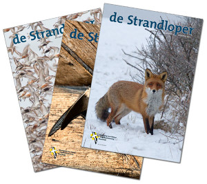 strandlopers_covers